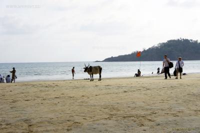 Гоа. Море, солнце, пляж