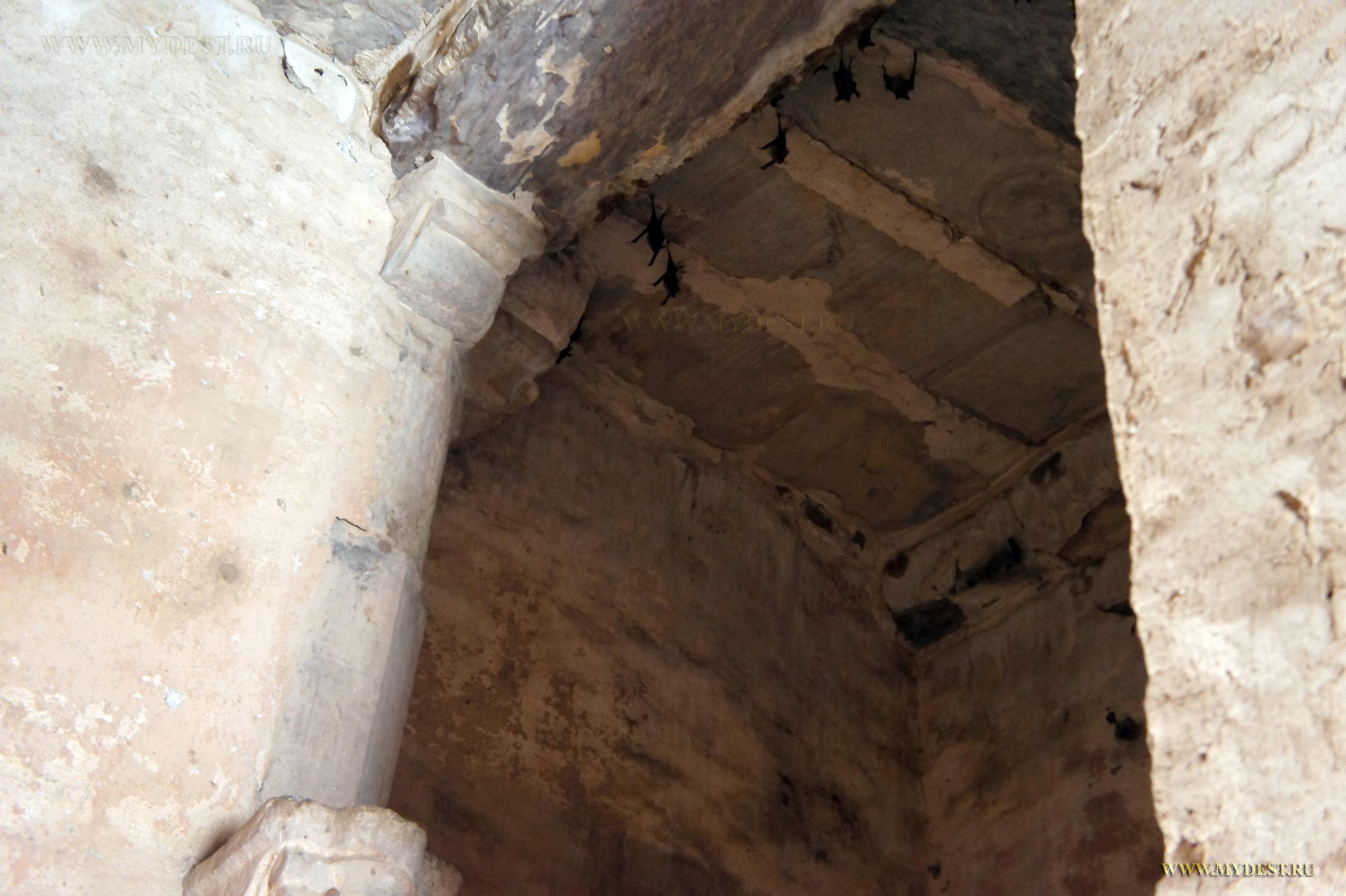 Летучие мыши в форте Читтор